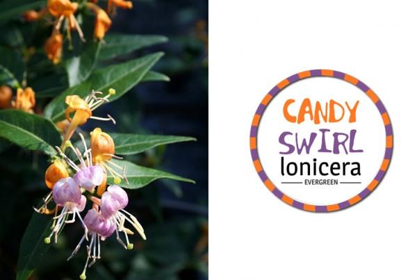 Candy Swirl identiteit