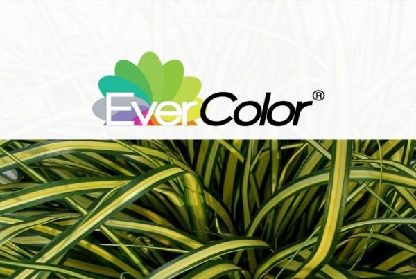 Evercolor identiteit & logo