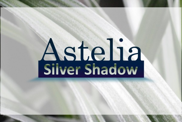 Astelia Silver Shadow logo