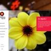 Mystic Dahlia website voorpagina