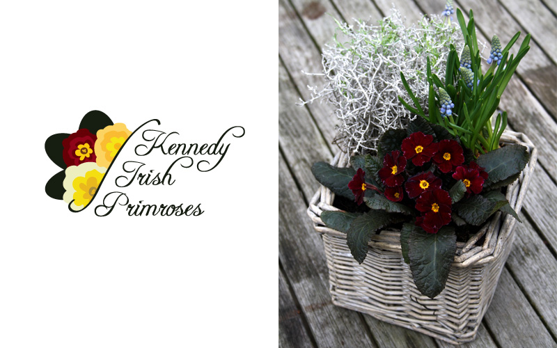 Kennedy Irish Primroses