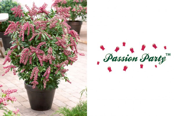 Passion Party branding