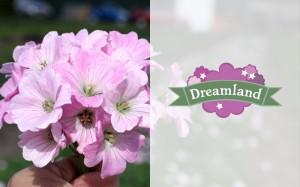 Dreamland identity