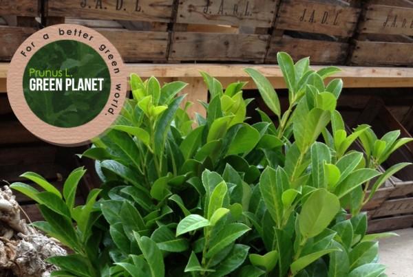 Prunus L. Green Planet branding en identiteit